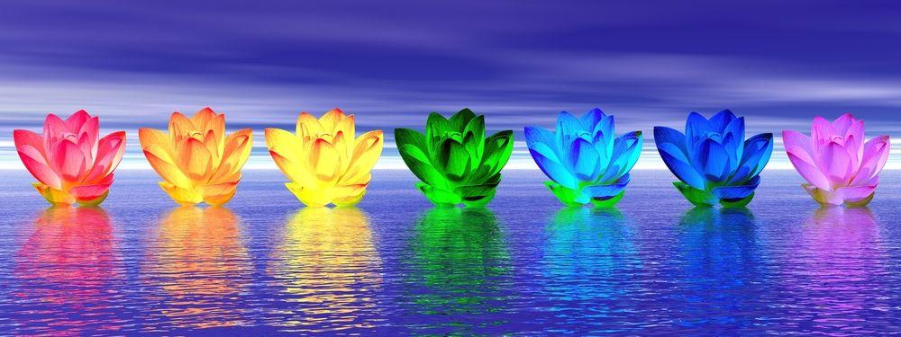 Lotus Flowers - Banner